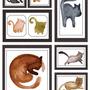 Papal De Parede Animal 3d Imagens De Gato
