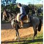 Cavalo Mouro Domado