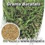 10kg Sementes De Grama Batatais Recém Colhidas Frete Grátis