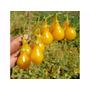 1000 Sementes Tomate Pera Amarelo Exótico # Mais Barato!