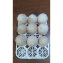 Ovos De Gansos Africanos