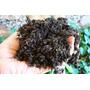 Adubo Orgânico Bokashi P/ Jardins, Hortas E Vasos - 5 Kg