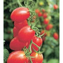 Sementes De Tomate Sweet Grape - 30 Sementes - Frete Gratis