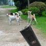 Repelente Ultrasonico Eletronico Cachorros Adestrar Cães