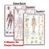 Kit 3 Mapas Sistema Muscular - Esquelético 1 - Esquelético 2