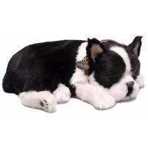 Filhote Perfect Petzzz Cachorro Boston Terrier Que Respira