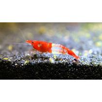 Camarão Red Rili Ornamental Água Doce