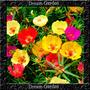 Onze Horas Singela Sortida Sementes Flor Para Mudas