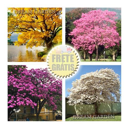 Kit Ipês 4 Cores + Brinde Jacaranda / Sementes Flor P/ Mudas