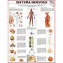 Mapa Do Sistema Nervoso - Gigante !!! 120 X 90 Cm