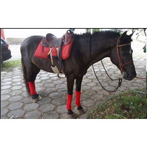 Imperdível !!! Cavalo Novo, Ideal Para Cavalgadas E Crianças