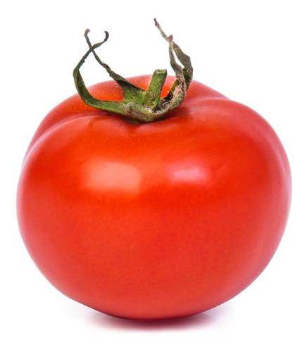 1000 Sementes De Tomate Híbrido Sta Cruz Bravo F1 # Original