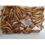 Larvas De Tenébras Gigantes, 40 Larvas Frete Grátis Rj
