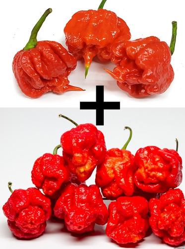100 Und Semente Pimenta Trinidade Scorpion + Carolina Reaper