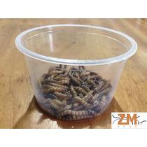 Tenébrio Gigante - 100 Unidades/larvas