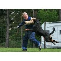 Rottweiler!! Para Todas As Raças, Adestramento De Cães 1 Dvd