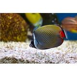 Apostila Aprenda Montar Seu Aquário De Peixes Ornamentais