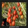 Frete Grátis *** 50 Sementes Tomate Uva Grape Sweet
