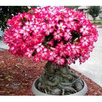 fcad4f7f1b Jardinagem Sementes Sementes de Flores com os melhores preços do ...