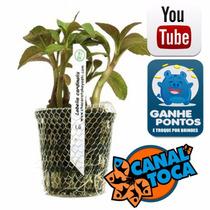 Planta Natural - Lobelia Cardinalis - Takeyoshi