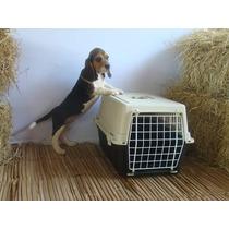 Caixa De Transporte Cachorro Ou Gato Ferplast Casa Cama Nova