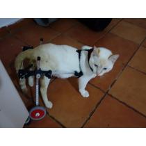 Cadeira De Rodas Para Gatos E Cães