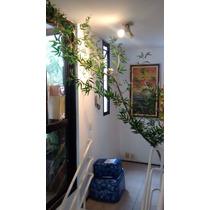 Bambu Mosso Artificial Até 240cm Altura