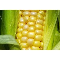 Semente Milho Super Doce Azteca 80gr Aprox 560 Sementes