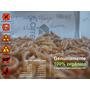 1000 Larvas De Tenebrio Molitor - Top Qualidade