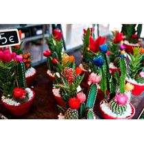 Cactos - Mini Cactos - Plantas Ornamentais