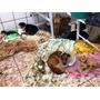 Doação De Alimento Para Cães Filhotes