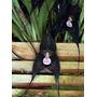 10 Sementes De Orquídea Cara De Macaco Black (muito Rara)