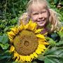 Girassol Anão Sunspot Cabeça Gigante Sementes Flor Para Muda