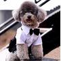 Roupa Cão Cachorro Terno Social Festa Casamento Tamanho M