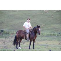 Cavalo/égua Crioula