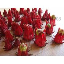 Vinagreira- Hibiscos, 01 Muda Apenas 24,90