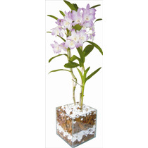 Vaso De Vidro, Incolor,quadrado,para Orquídea 12x12x17