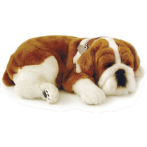 Filhote Cachorro Bulldog Perfect Petzzz - Respira