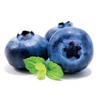 Blueberry-mirtilio-já Produzindo