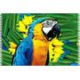 Canga De Praia Pássaro Arara / Souvenir Do Brasil