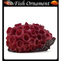 Enfeite De Resina Soma Coral Sun Pq