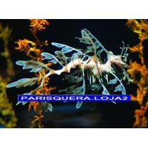 Dragão Do Mar Peixe Silicone Para Aquario Aquarismo Enfeite