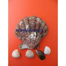 Enfeite Concha Vieiras Modelo Shell Aquário, Lagos