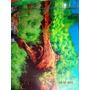 Painel Decorativo Fotos Especiais Para Aquários 50x40