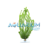 Planta Artificial Tetra Ambulia 61cm