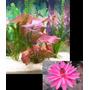 Plantas Para Aquário Plantas Aquáticas (20 Unidades) R$99,90