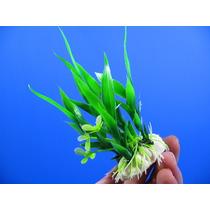 Planta Artificial P/ Aquários E Terrários 10cms - Cód.121062
