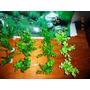 Kit Decoração, Plantas Artificiais Com Base + Painel