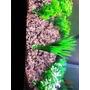 Plantas Artificias Para Aquário Pacote Com 06 Importadas