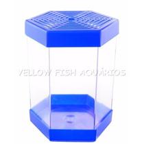 Aquário Beteira 1 Litro Litwin Azul Para Peixe Betta